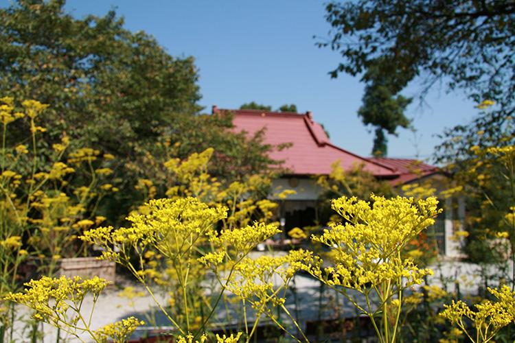 秋の七草寺